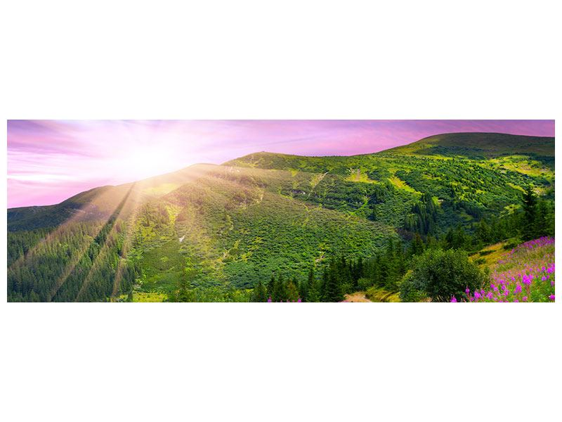 Panoramic Acrylic Print A Summer Landscape At Sunrise