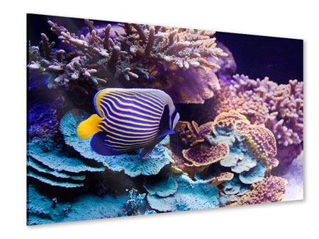 Acrylic Print Fascination Underwater