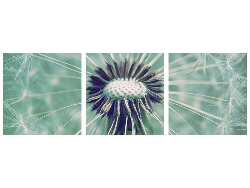 Panorama Aluminiumbild 3-teilig Close Up Pusteblume