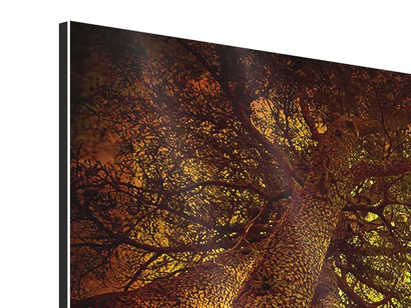 Panoramic 3 Piece Aluminium Print Cedar Tree