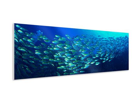 Panoramic Forex Print Shoal Of Fish