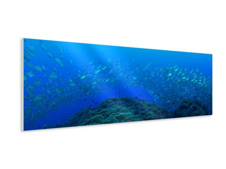 Panoramic Forex Print Schools Of Fish
