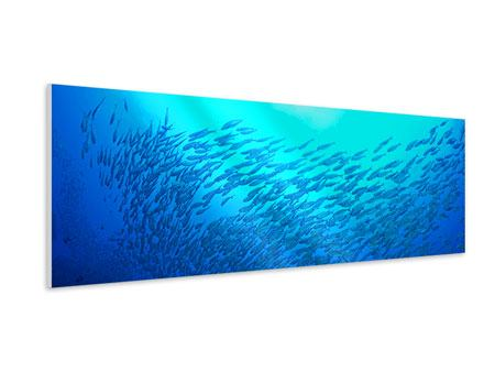 Panoramic Forex Print Fish World