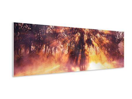 Panoramic Forex Print Forest Reflection