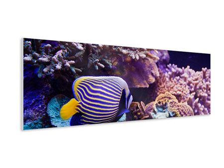 Panoramic Forex Print Fascination Underwater