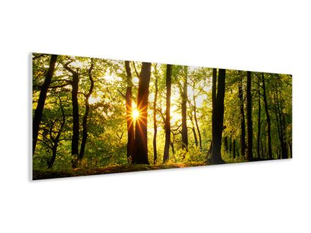Panoramic Forex Print Sunset Between Trees