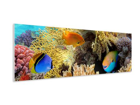 Panoramic Forex Print Fish Wealth