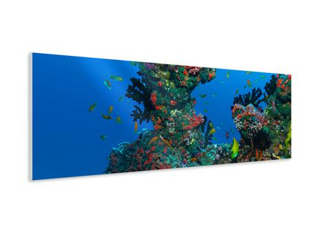 Panoramic Forex Print The World Of Fish