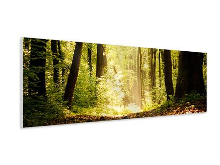 Panoramic Forex Print Sunrise In The Forest