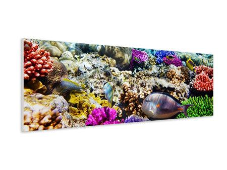 Panoramic Forex Print Fish Aquarium