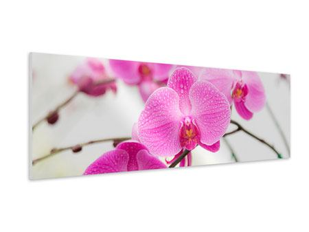 Panoramic Forex Print The Symbol Of Orchid