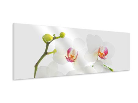 Panoramic Forex Print Orchids Love