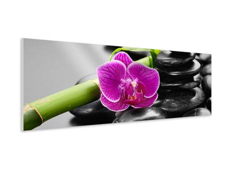 Panoramic Forex Print Feng Shui Orchid