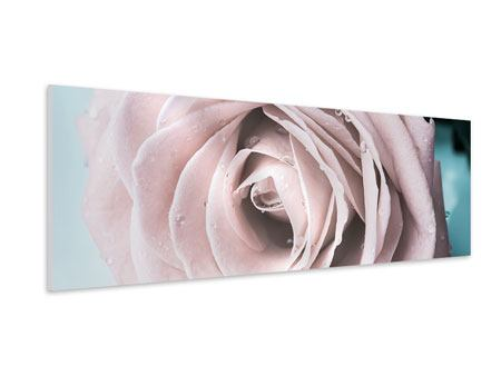 Panoramic Forex Print Pastel Rose