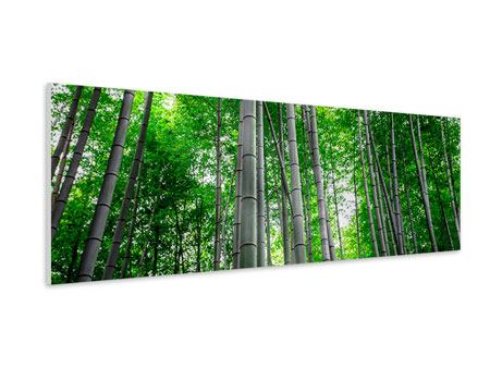 Panoramic Forex Print Bamboo Forest