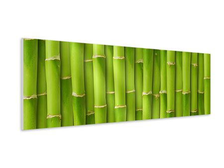 Panoramic Forex Print Bamboo Wall