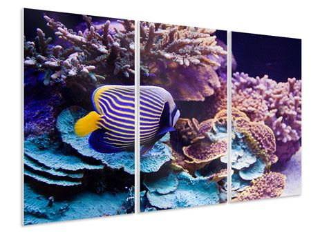 3 Piece Forex Print Fascination Underwater