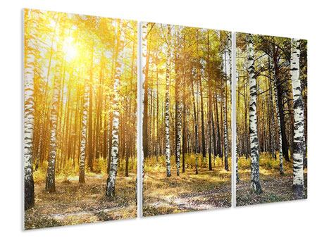 3 Piece Forex Print Birch Forest