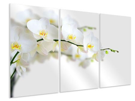 3 Piece Forex Print White Orchids