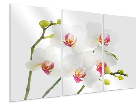 3 Piece Forex Print Orchids Love