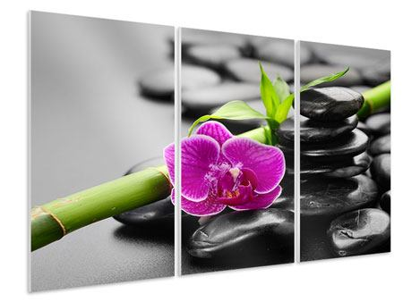 3 Piece Forex Print Feng Shui Orchid