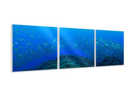 Panoramic 3 Piece Forex Print Schools Of Fish