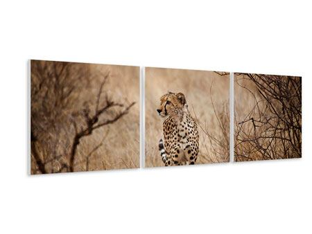 Panoramic 3 Piece Forex Print Elegant Cheetah