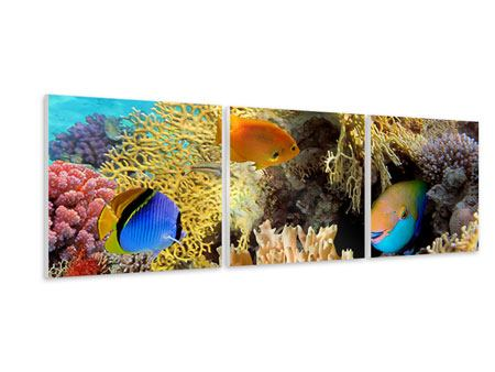 Panoramic 3 Piece Forex Print Fish Wealth