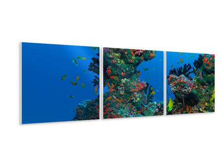 Panoramic 3 Piece Forex Print The World Of Fish