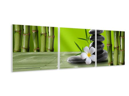 Panoramic 3 Piece Forex Print Bamboo