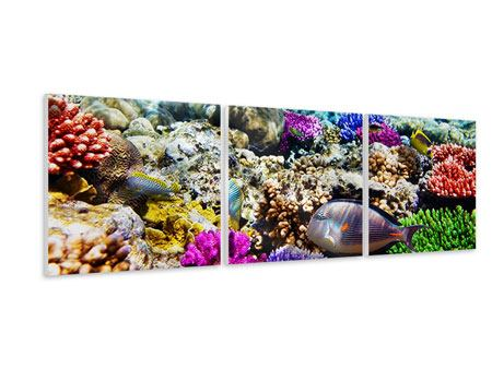 Panoramic 3 Piece Forex Print Fish Aquarium