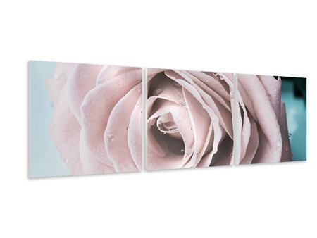 Panoramic 3 Piece Forex Print Pastel Rose
