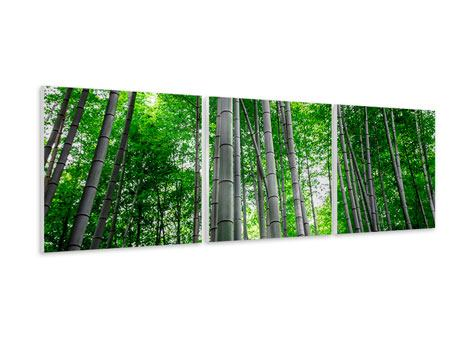 Panoramic 3 Piece Forex Print Bamboo Forest