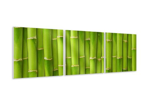 Panoramic 3 Piece Forex Print Bamboo Wall