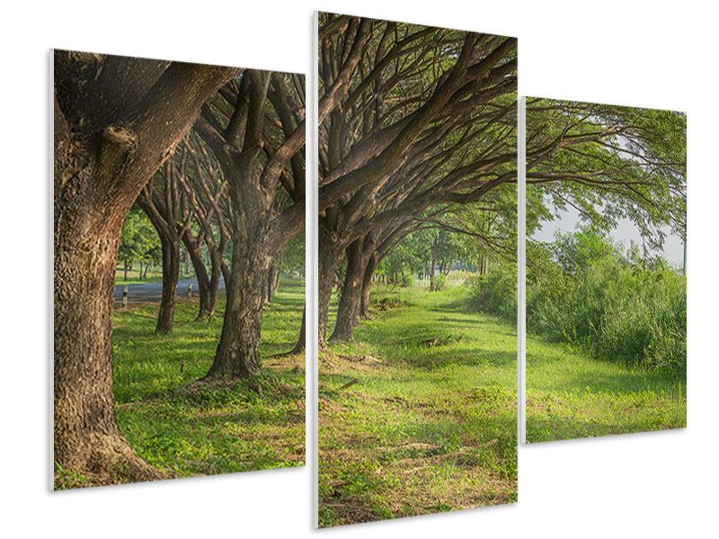 Modern 3 Piece Forex Print Mature Trees