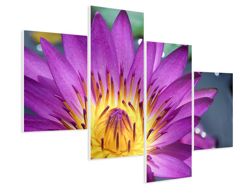 Modern 4 Piece Forex Print Macro Water Lily In Purple