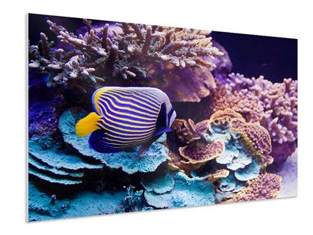 Forex Print Fascination Underwater