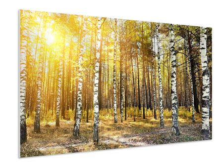 Forex Print Birch Forest