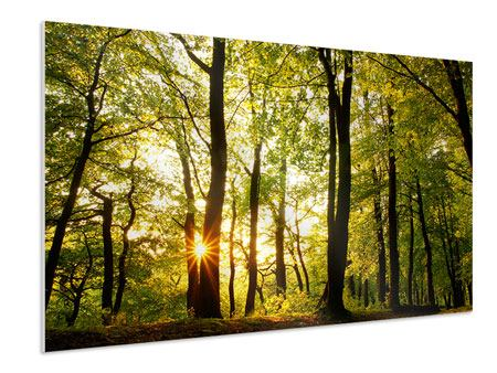 Forex Print Sunset Between Trees
