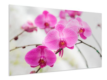 Forex Print The Symbol Of Orchid