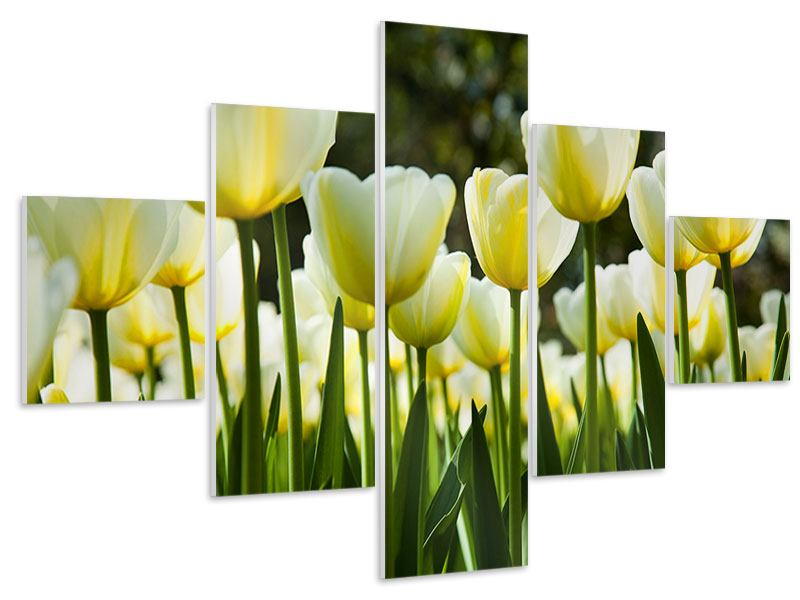 5 Piece Forex Print Tulips At Sunset