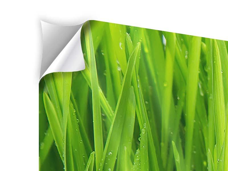 Self-Adhesive Poster Grass In Morning Dew