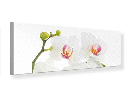 Panoramic Canvas Print Orchids Love