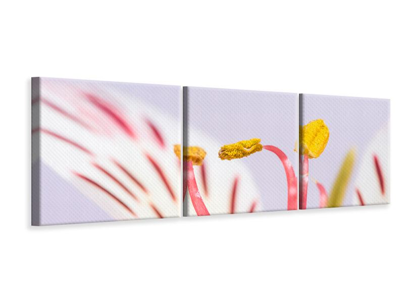 Panoramic 3 Piece Canvas Print Close Up Exotic Beauty