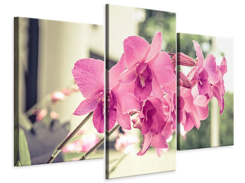 Modern 3 Piece Canvas Print A Window Seat For Orchids