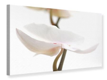 Canvas Print XXL Orchid Flower