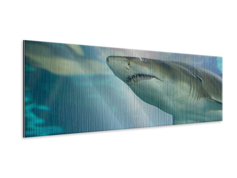 Panoramic Metallic Print Shark