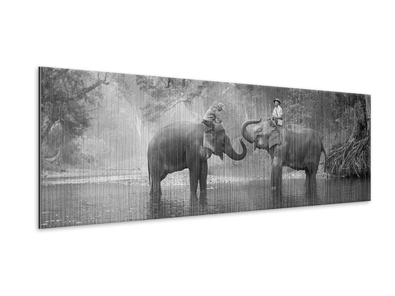 Panoramic Metallic Print Two Elephants